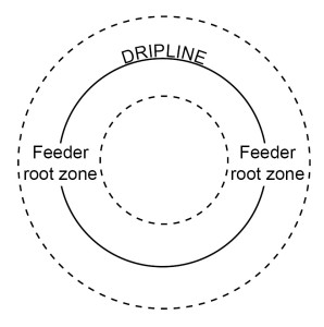 dripline